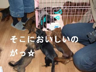 まわりにおしよせbのコピー.jpg