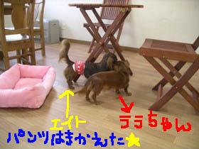 エイトとララちゃんB.jpg