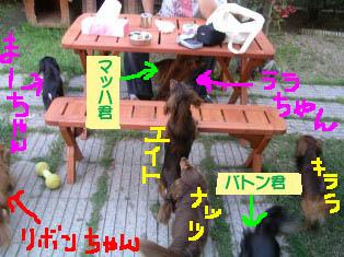 エイトほしいなーbのコピー.jpg