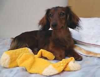 エイト子犬ベッド.jpg