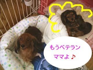 聖子いくじ2ワンbのコピー.jpg