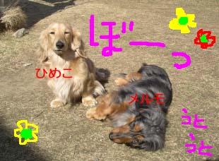 ひめことメルbのコピー.jpg