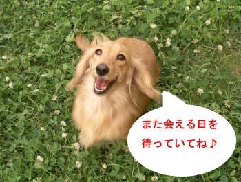 ひめこ可愛bのコピー.jpg