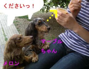 メロンとマーブルちゃんbのコピー.jpg