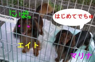 エイトとマリナ2bのコピー.jpg