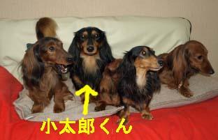 コタロカメラめせんbのコピー.jpg