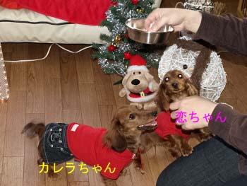 コイカレ ご飯ほしいbのコピー.jpg