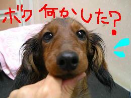 シャンプーエイトB絵.jpg