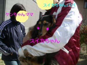 スイカちゃん抱っこbのコピー.jpg