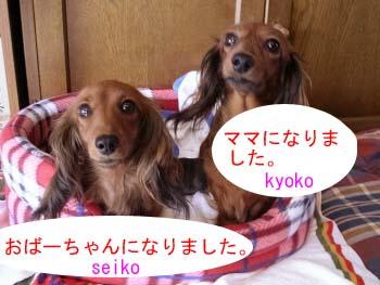 セイコ今日子bのコピー.jpg