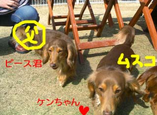 ピーとケンちゃんbのコピー.jpg