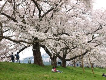 大きな木b.jpg