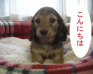 ちょーじょ1bのコピー.jpg