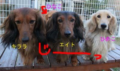 エイトじーbのコピー.jpg