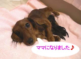 koiBのコピー.jpg