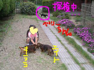 yui5e.jpg