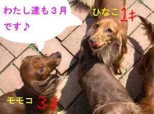 ひなこモモコbのコピー.jpg