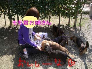 モモのお姉さんbのコピー.jpg