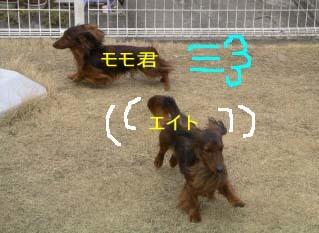 エイトとモモbのコピー.jpg