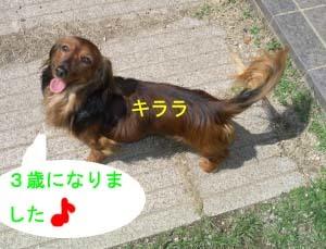 キララの笑顔bのコピー.jpg