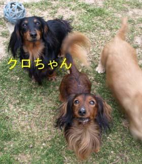 クロちゃんとエイト1.jpg