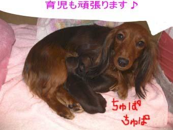 聖子と赤ちゃんハウスBE.jpg