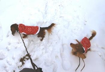 雪の中見上げピーb.jpg