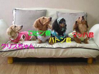 お揃い4ワンちゃんbのコピー.jpg