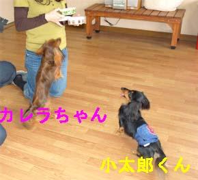 ご馳走bのコピー.jpg