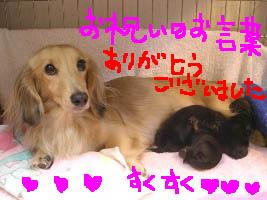 さくらちゃん美しいママ1絵.jpg