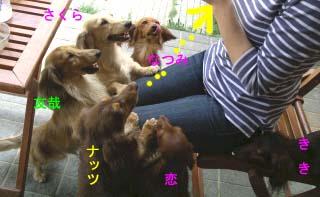 なっちゃんぺろんちょbのコピー.jpg