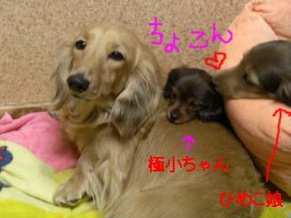 ひめこと極小bのコピー.jpg