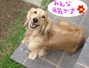 ひめこ1Bのコピー.jpg