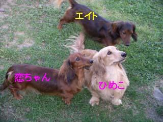 ひめこ恋bのコピー.jpg