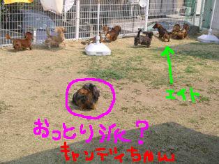 みんな庭b.jpg