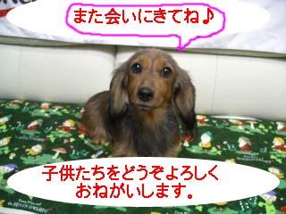 もみじちゃんbのコピー.jpg