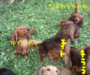 ゆずひま4ゆずちゃんbのコピー.jpg