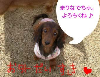 マリナお庭bのコピー.jpg