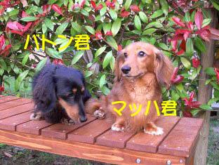 マッハ君バトンくんBのコピー.jpg