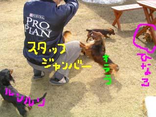 モカちゃんパパスタッフ化b.jpg