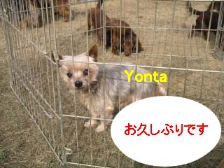 ヨンタbのコピー.jpg