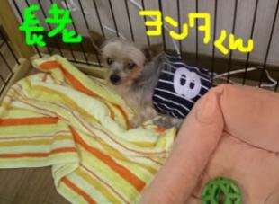 ヨンタ腹巻き風b.jpg
