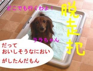 ララちゃんbのコピー.jpg