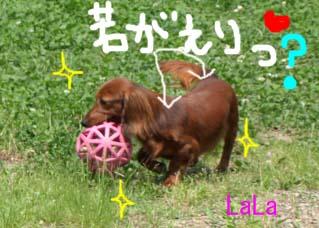 ララ差し毛bjpgのコピー.jpg