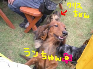 ランちゃん.jpg