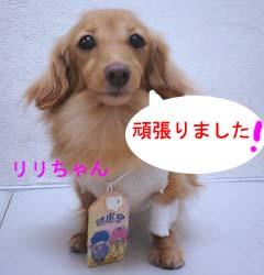 リリちゃんがんばったのコピー.jpg