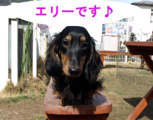 エリーちゃん1bのコピー.jpg