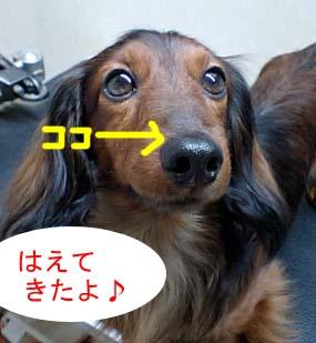 エイトあっぷbのコピー.jpg