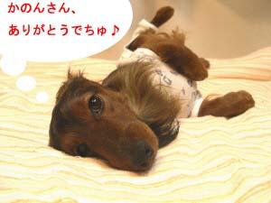 エイトころんのコピー.jpg