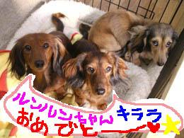エイトとモモコ絵つき11月B.jpg
